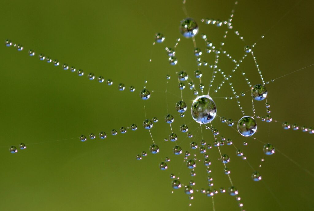 Hämähäkin seitti, jossa vesipisaroita