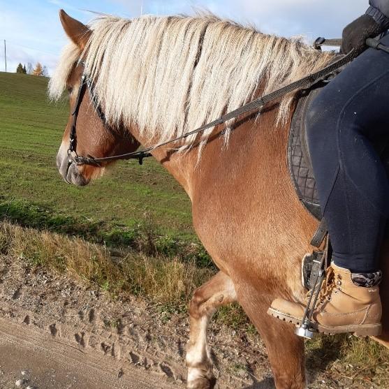 Kuvituskuvassa suomenhevonen ja ratsastaja.