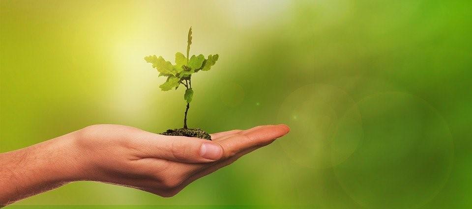 Kuvituskuvassa ihmisen kämmen, jonka päällä kasvin verso. Kuvan tausta on vihreä.