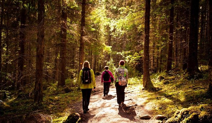 Ihmisiä kävelee kansallispuistossa