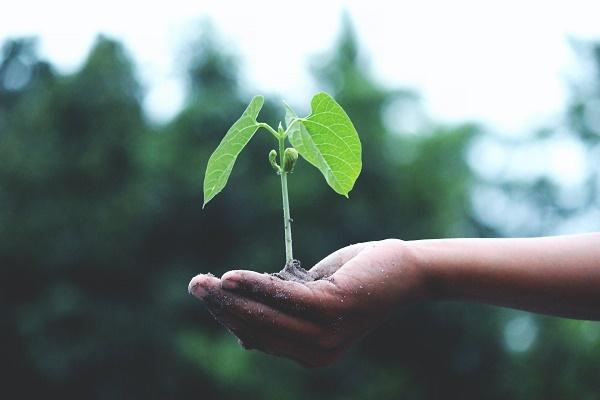 Kuvituskuva, jossa ihminen pitää kämmenensä päällä kasvin versoa.