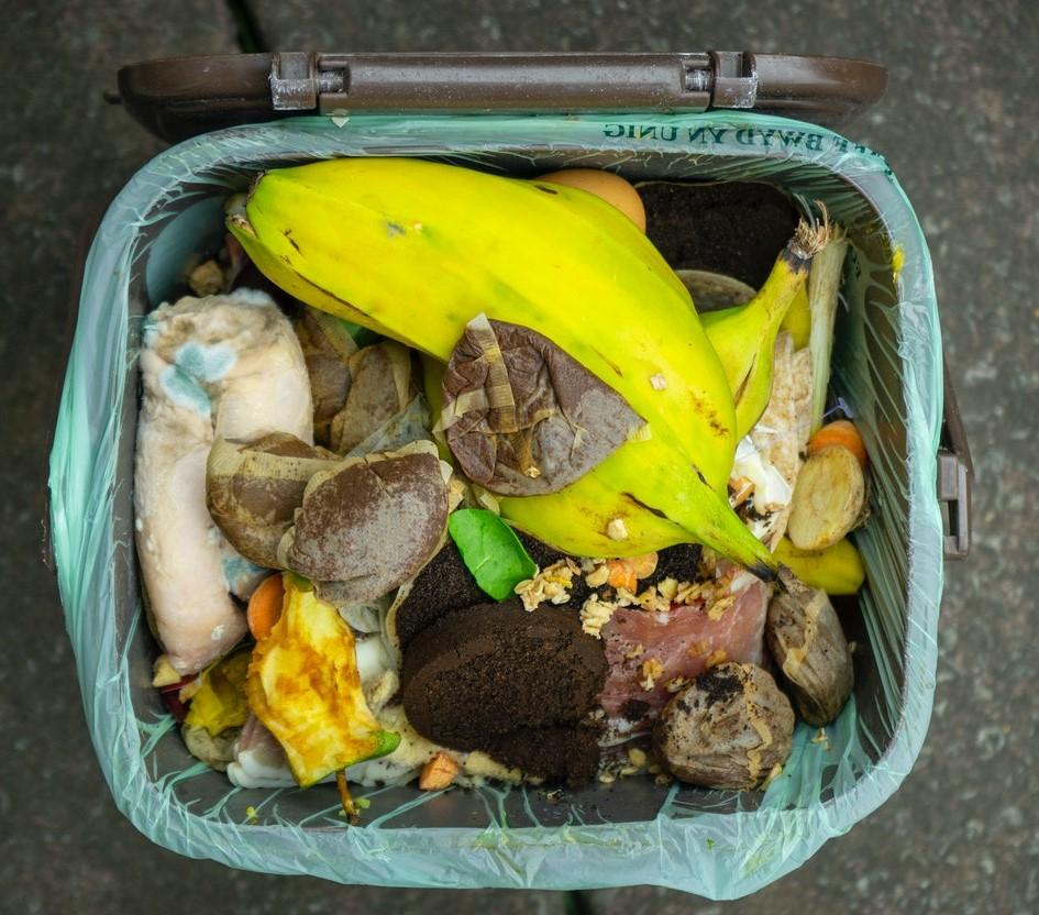 Kuvituskuva, jossa on biohajoavaa roskaa, kuten hedelmien kuoria.